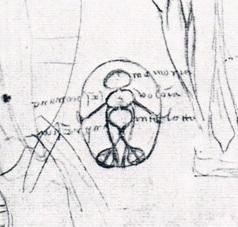 Leonardo-12626r-detail