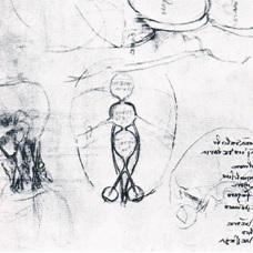 Leonardo-12627r-detail